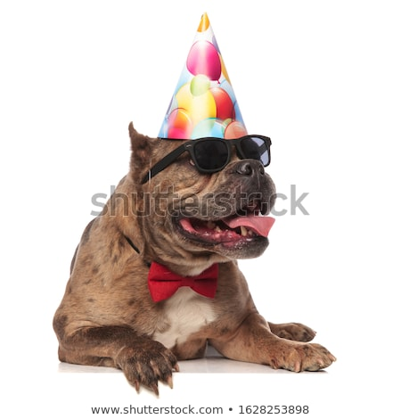 american bully wearing bowtie and birthday hat looks to side Stock photo © feedough