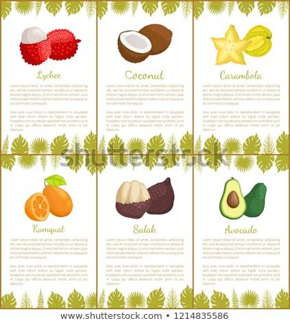 кокосового плакатов набор вектора текста образец Сток-фото © robuart