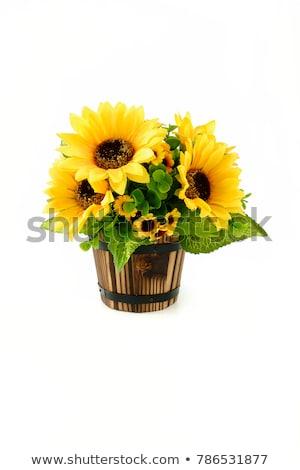 zonnebloem · plant · vector · icon · stijl - stockfoto © bluering