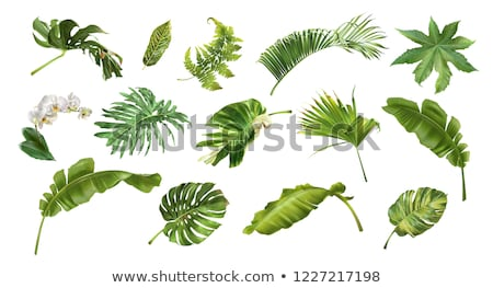 тропические экзотический листьев цветы плакат вектора Сток-фото © pikepicture