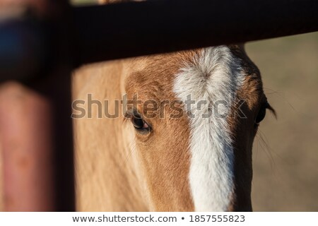 juvenile blonde with horse Stock photo © photography33
