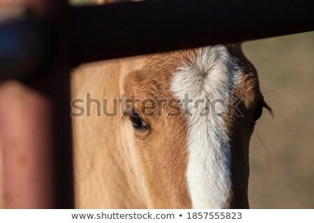 несовершеннолетний блондинка лошади свет подготовки руки Сток-фото © photography33
