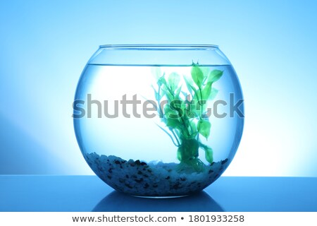 empty fishbowl stock photo © designsstock