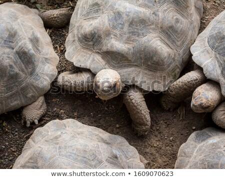 Affollato insieme tartaruga pagoda Vietnam animali Foto d'archivio © clearviewstock