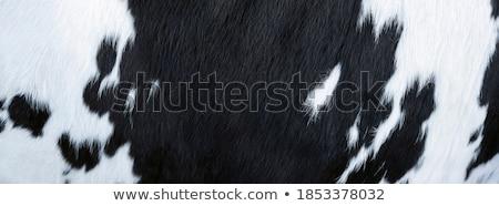 Cowhide Stock photo © sumners