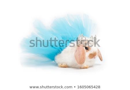 Ballerina on the white background Stock photo © pzaxe
