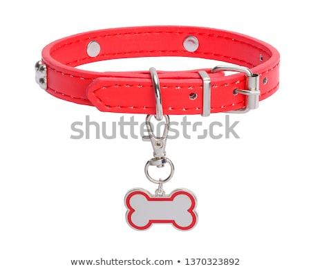 Dog collar. Stock photo © timurock