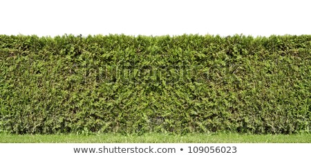 Darab vidéki kerítés örökzöld növények nap Stock fotó © vavlt