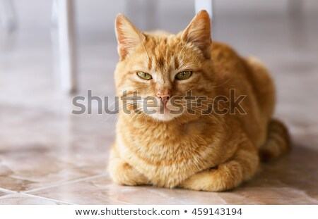 Red Cat With Green Eyes Sitting And Looking Foto stock © FrimuFilms