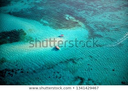 Stock fotó: Kék · pont · korall · úszik · tengerpart · hal