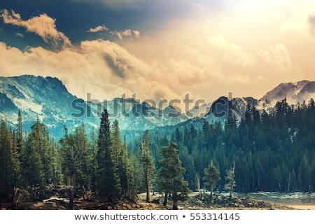 Nevada · USA · első · hó · park · összes - stock fotó © lunamarina