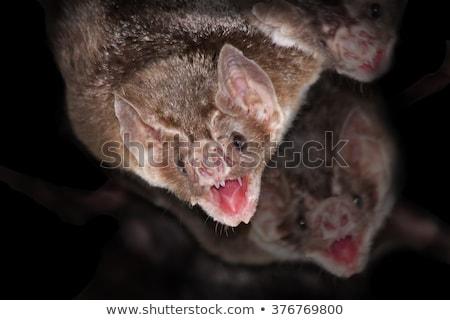 Vampir bat düzenlenebilir vektör siluet içme Stok fotoğraf © Tawng
