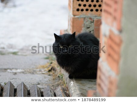 white and brown cat sitting on doorstep of the house Stock photo © meinzahn