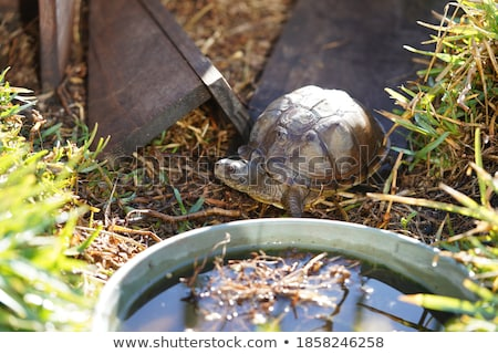 Beautiful turtle in its enclosure Stock photo © epstock