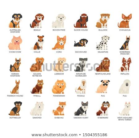 miniature pinscher and a bloodhound stock photo © eriklam