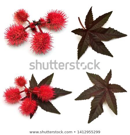 vermelho · erva · daninha · flor · blue · sky · jardim · verão - foto stock © paha_l
