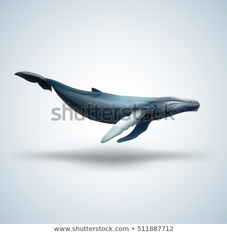 blue whale white background vector illustration of marine anima stock photo © maryvalery