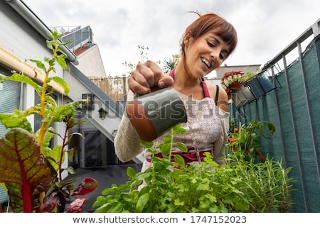 woman caring for plant Stock photo © IS2