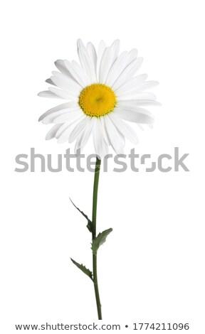 Belo perfumado jardim primavera flor Foto stock © konradbak