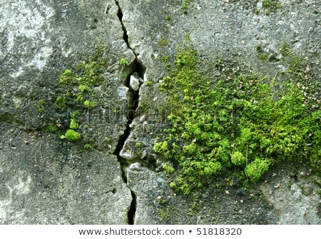 moss growing on damp wall Stock photo © taviphoto