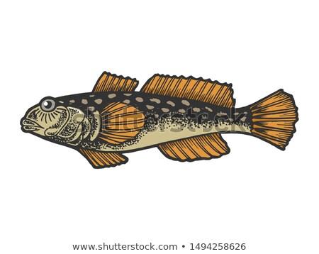 Aquarium poissons isolé blanche graphique eau douce Photo stock © robuart