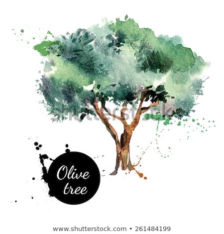 Natürlichen frischen Olivenbaum Zweig Banner Vektor Stock foto © pikepicture