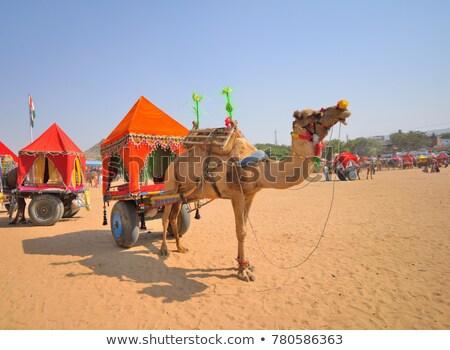 Kameel taxi eerlijke Indië ingericht winkelwagen Stockfoto © dmitry_rukhlenko