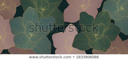 lótusz · virág · zöld · levél · tavasz · levél · zöld - stock fotó © koratmember