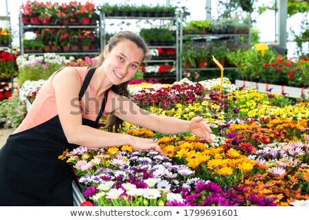 fleurs · jaune · isolé · blanche · jardin · fond - photo stock © lianem