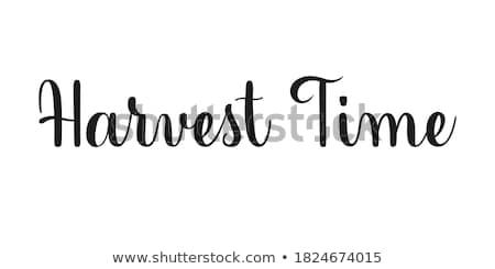Colheita tempo cortar grão fazenda Foto stock © Gordo25