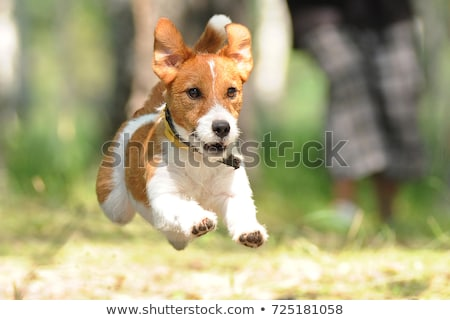Jack russell jardín grupo funny tres perro Foto stock © CaptureLight