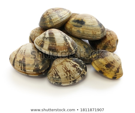 Clam Stock photo © zzve