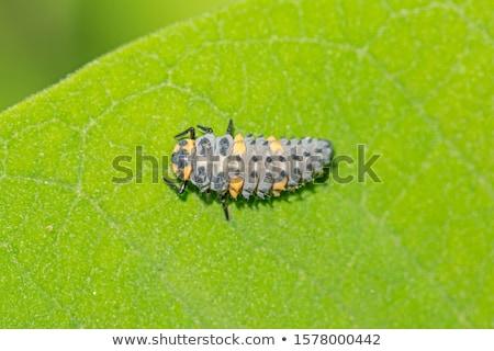 Sete joaninha verde musgo espaço texto Foto stock © tainasohlman