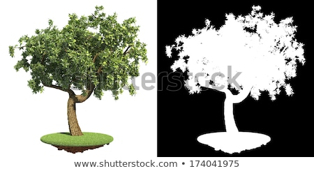 Green Tree with Detail Raster Mask. Stock photo © tashatuvango