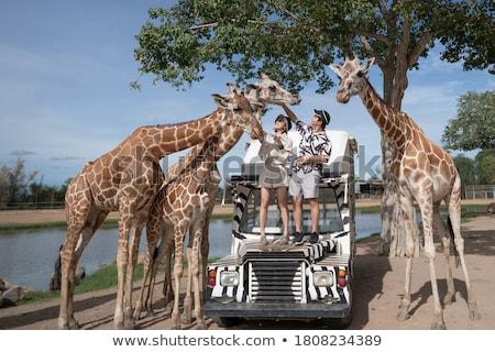 állatkert szafari illusztráció elefánt fa erdő Stock fotó © adrenalina