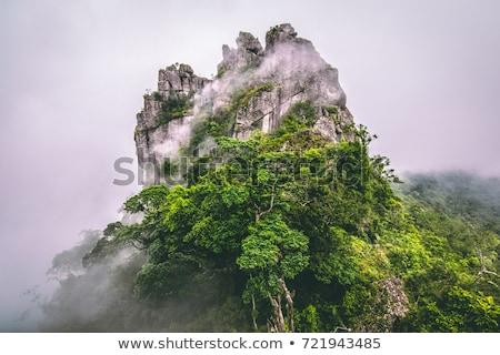 evergreen · alberi · bella · montagna · nubi - foto d'archivio © mahout