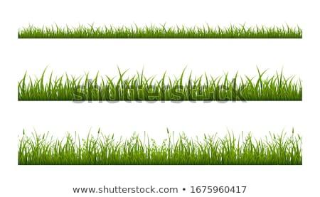 シームレス 草 白 自然 芸術 フィールド ストックフォト © aliaksandra