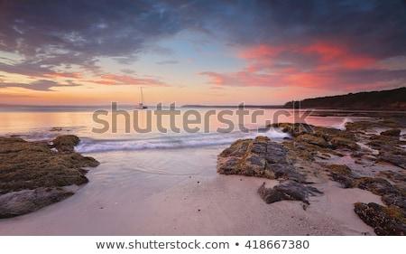 Tramonto paesaggio marino cavolo albero spiaggia bella Foto d'archivio © lovleah
