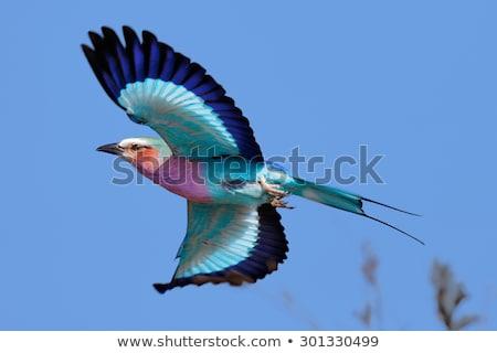 fa · madár · Afrika · fej · park · gyönyörű - stock fotó © marcrossmann