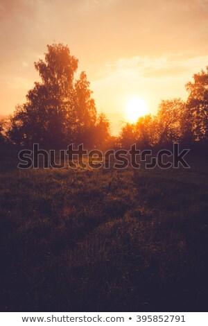 Sunrise filtrare dietro alberi natura Foto d'archivio © Juhku