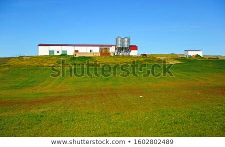 Cereal fields in Extremadura of Spain  Stock photo © lunamarina