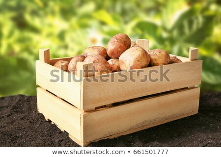 Stock photo: Potatoes peeled and unpeeled in crate