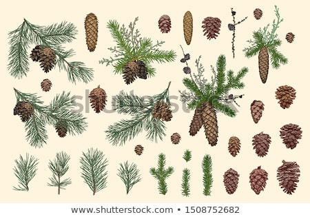 Coniferous tree branch with cones. Stock photo © gitusik