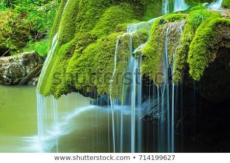 Détail belle cascade plein vert mousse Photo stock © taviphoto