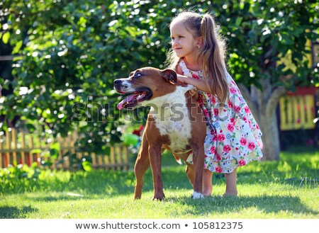 Mujer toro terrier blanco amor animales Foto stock © cynoclub