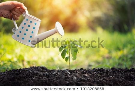 従業員 · 水まき · 植物 · 庭園 · センター · 作業 - ストックフォト © is2