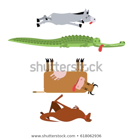 dead kangaroo animal is death corpse of australian beast stock photo © popaukropa