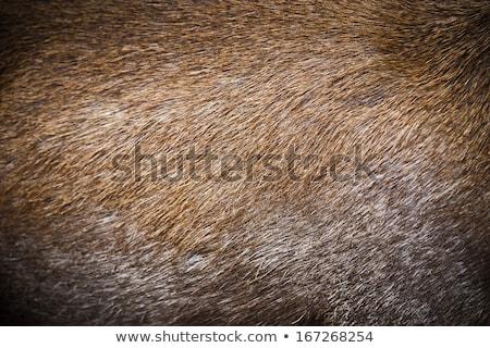 шаблон · реальный · оленей · мех · текстуры · аннотация - Сток-фото © boggy