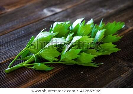 monte · erva · comida · madeira · folha - foto stock © Virgin