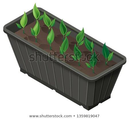 Feld Sämlinge grünen Pflanzen Vektor Stock foto © orensila